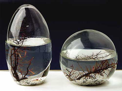 ecosphere krebse im glas microkosmos geschenke. Black Bedroom Furniture Sets. Home Design Ideas